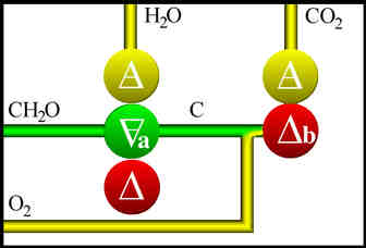 Image Result For Metathesis Process